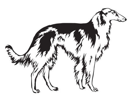 Decoratie Russian wolfhound, Borzo vector illustration in black and white Vectores