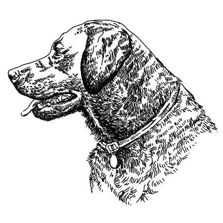 Labrador retriever cabeza vector dibujo a mano ilustración