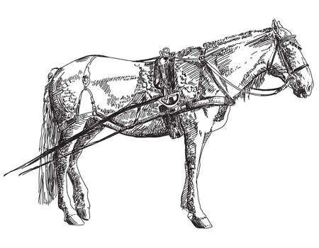 Horse in harness hand drawing illustration on white background