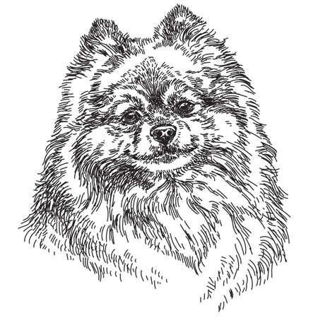 Ilustración de dibujo de mano pequeño vector de Pomerania en blanco y negro Ilustración de vector