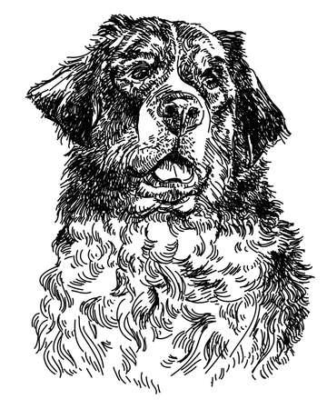 Graphic portrait of swiss bernese dog ,big black dog swiss mountain dog.