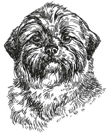 Graphic portrait of Dog Shih Tzu hand drawing illustration. Vector isolated on a white background. Illustration
