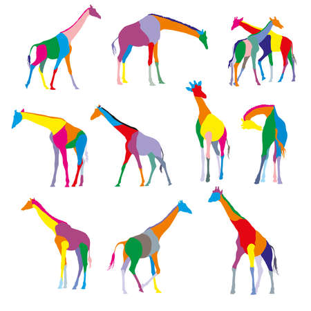 wilderness area: Set of colorful stained silhouettes of giraffes isolated on white bacground