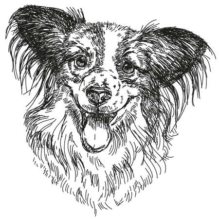 Papillon portrait vector hand drawing illustration in black on white background