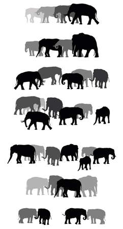 Set of vector family group of black and grey standing indian and african elephants on white background