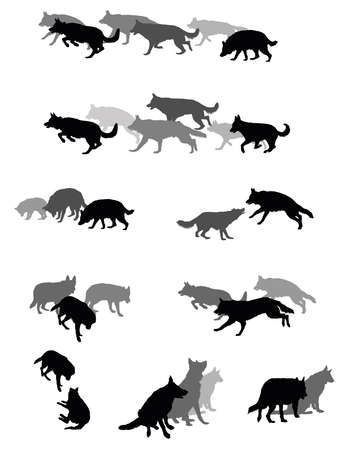 Set vector silhouettes group of dogs (German shepherd dog) black and grey colors and cut out on white background. Relationship of dogs