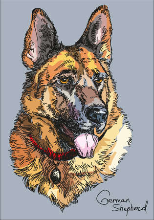 Colorful portrait of German shepherd vector hand drawing Illustration