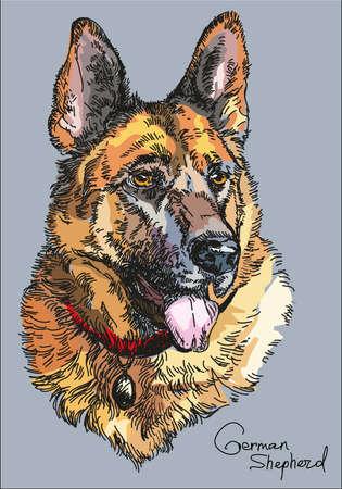 Kleurrijk portret van illustratie van de de handtekening van de Duitse herder de vector