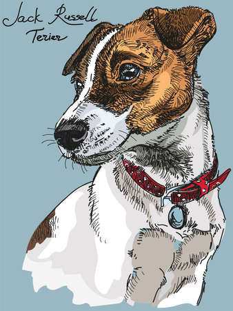 Colorful Vector Portrait of dog Jack Russel terrier hand drawing Illustration on blue background Illustration
