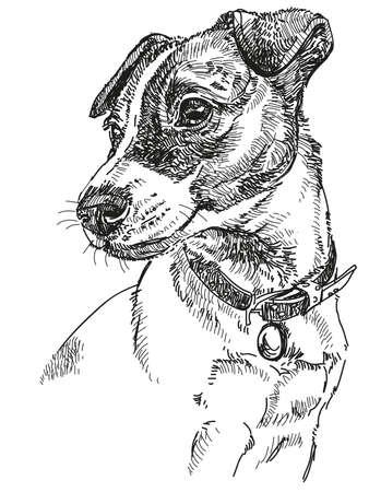 Vector Portrait of dog Jack Russel terrier in black color hand drawing Illustration on white background Illustration
