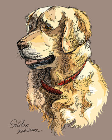 Vector Portrait of colorful dog Golden retriever hand drawing Illustration on brown background