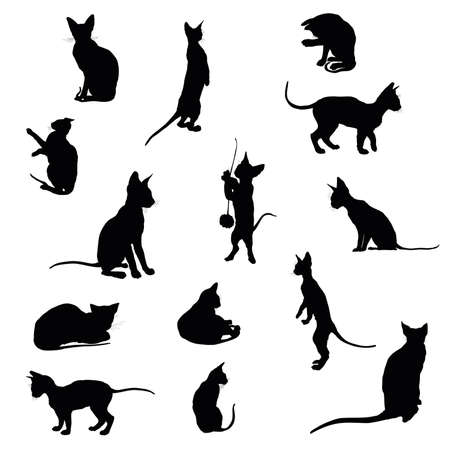 Set of black isolated cats silhouettes (sitting, standing, lying) on white background Illustration
