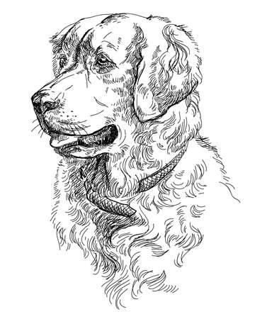 Vectorportret van hond Gouden retriever in de tekeningillustratie van de zwarte kleurenhand op witte achtergrond