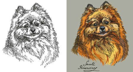 Small Pomeranian vector hand drawing illustration on black and white and different color on grey background Illustration