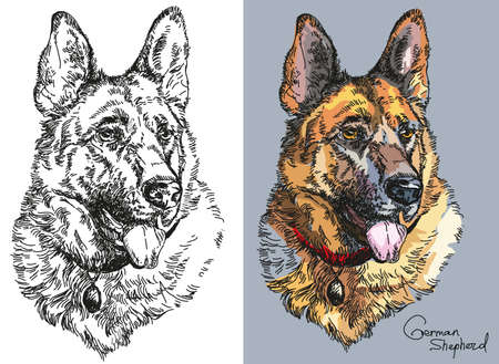 Black and white and colorful on grey background portraits of German shepherd vector hand drawing Illustration