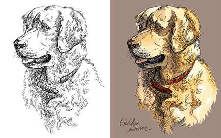 黒と白と茶色の背景の犬ゴールデン ・ リトリーバー手描きのイラストのカラフルなベクトルの肖像画