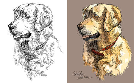 Vector Portraits of black and white and colorful on brown background dog Golden retriever hand drawing Illustration Иллюстрация