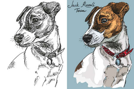 Vector Jack Russel terrier in color and black and white hand drawing Illustration