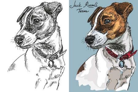 Vektor Jack Russel Terrier in Farbe und Schwarz-Weiß Hand Zeichnung Illustration Vektorgrafik