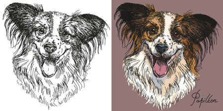 Vector Portraits of black and white and colorful on pink background dog Papillon hand drawing Illustration Çizim