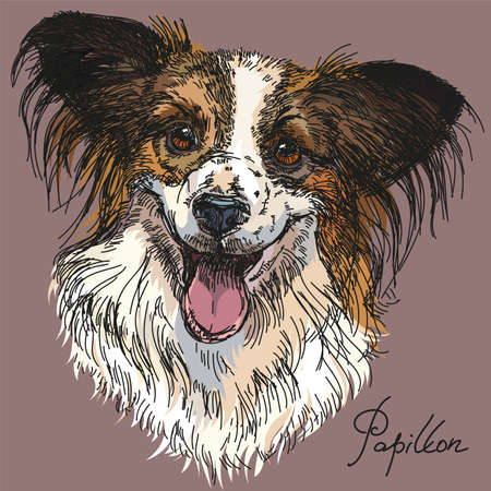 Papillon portrait vector hand drawing illustration in different colors on grey background Çizim