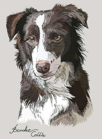 Border Collie Vektor Hand Zeichnung Illustration in unterschiedlicher Farbe auf grauem Hintergrund Standard-Bild - 78274597