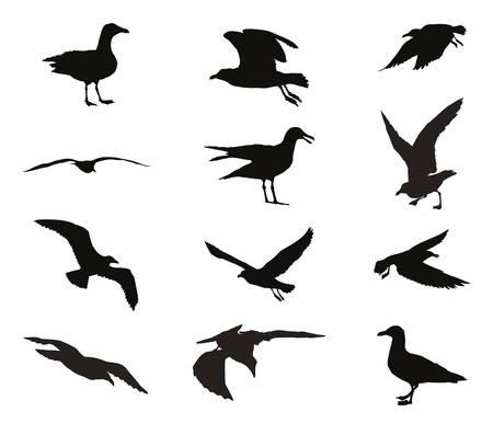 Ensemble de silhouettes de mouettes en couleur noire isolé sur fond blanc Banque d'images - 79025721