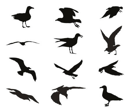 Set of silhouettes of seagulls in black color isolated on white background
