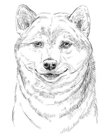 akita: Shiba Inu vector hand drawing portrait in black color isolated on white background