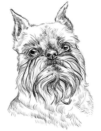 shaggy: Brussels griffon dog breed vector portrait in black color isolated on white background