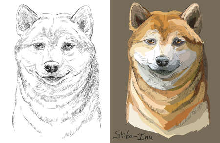 Colored on brown background and black and white Shiba Inu vector portrait