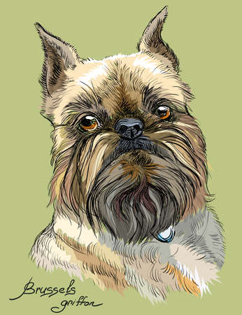 Colored brussels griffon dog portrait on green background vector hand drawing illustration