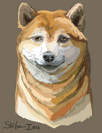 Colored orange Shiba Inu vector hand drawing portrait on brown background Illustration