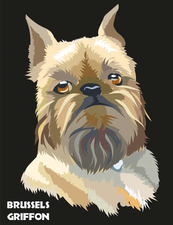 Colored brussels griffon vector isolated portrait on black background Illustration