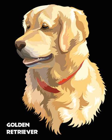 黒い背景にゴールデンレトリーバー犬のカラフルな分離ベクトルの肖像  イラスト・ベクター素材