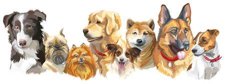 異なった犬の品種 (ブリュッセル ・ グリフォン、芝犬、ポメラニアン、ボーダーコリー、ドイツ ・ シェパード、ゴールデンレトリバー、ジャック   イラスト・ベクター素材