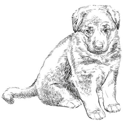 Puppy of german shepherd vector hand drawing Illustration isolated in black color on white background Ilustracja