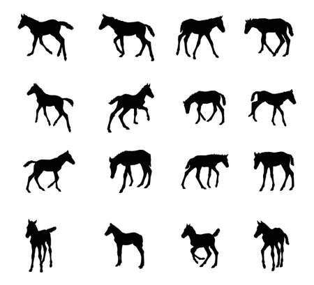 Set of vector standing, trotting, galloping foals black silhouettes isolated on white background Imagens - 80088372