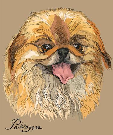 Pekingese 강아지의 손으로 그리기의 벡터 컬러 초상화 베이지 색 배경 그림