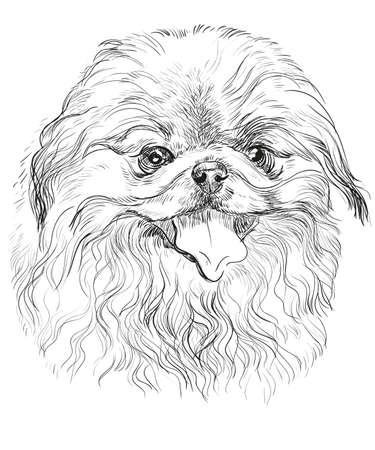 벡터 검은 색 손에서 드로잉 그림에서 Pekingese 강아지의 초상화 흰색 배경에 일러스트