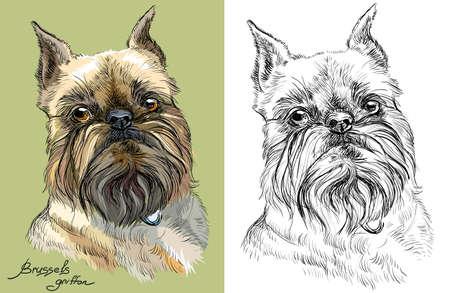 緑の背景色ブリュッセル ・ グリフォン犬の肖像画とデッサン イラスト白背景ベクトル手の色を黒と
