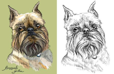 Colored brussels griffon dog portrait on green background and and black color on white background vector hand drawing illustration