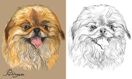 Colored Pekingese dog portrait on beige background and and black color on white background vector hand drawing illustration Иллюстрация