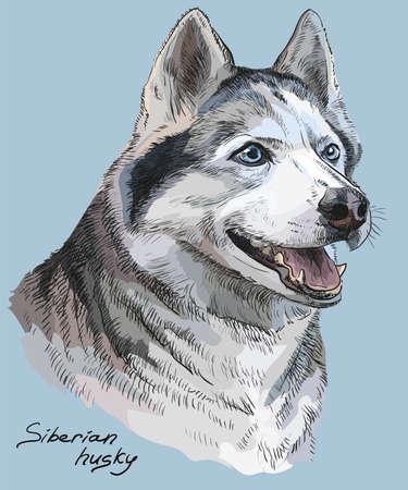 シベリアン ・ ハスキーのベクトル色の肖像手青色の背景色の描画図