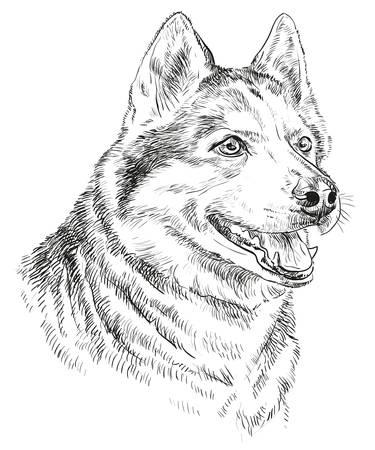 Vecteur portrait de husky sibérien en noir couleur dessin à la main illustration sur fond blanc Banque d'images - 80314436