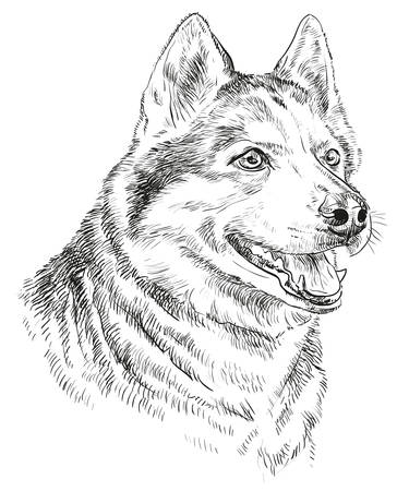 Vector Portrait of siberian husky in black color hand drawing Illustration on white background Vettoriali