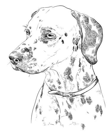 Vector Portrait of dalmatian in black color hand drawing Illustration on white background Vettoriali