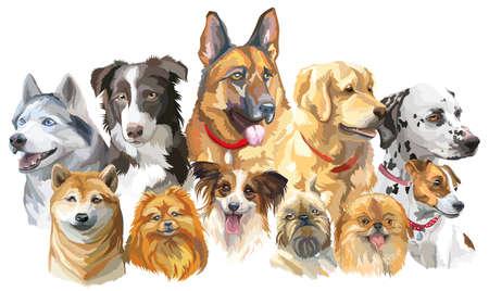 Conjunto de coloridos retratos vectoriales de razas de perros (husky siberiano, border-collie, pastor alemán, shiba Inu, perro perdiguero de oro, dalmatian, jack russel terrier, papillon, pequeño pomeranian, bruselas griffon)