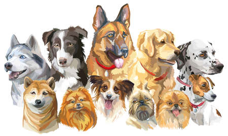 Set of colorful vector portraits of dog breeds (siberian husky, border-collie; german shepherd; shiba Inu; golden retriever; Dalmatian, jack Russel terrier, papillon, small pomeranian, brussels griffon; Pekingese) isolated on white background