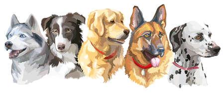 大型犬 (シベリアン ハスキー、ボーダーコリー ゴールデン ・ リトリーバー ジャーマン ・ シェパード; ダルメシアン) 白い背景で隔離のカラフルな